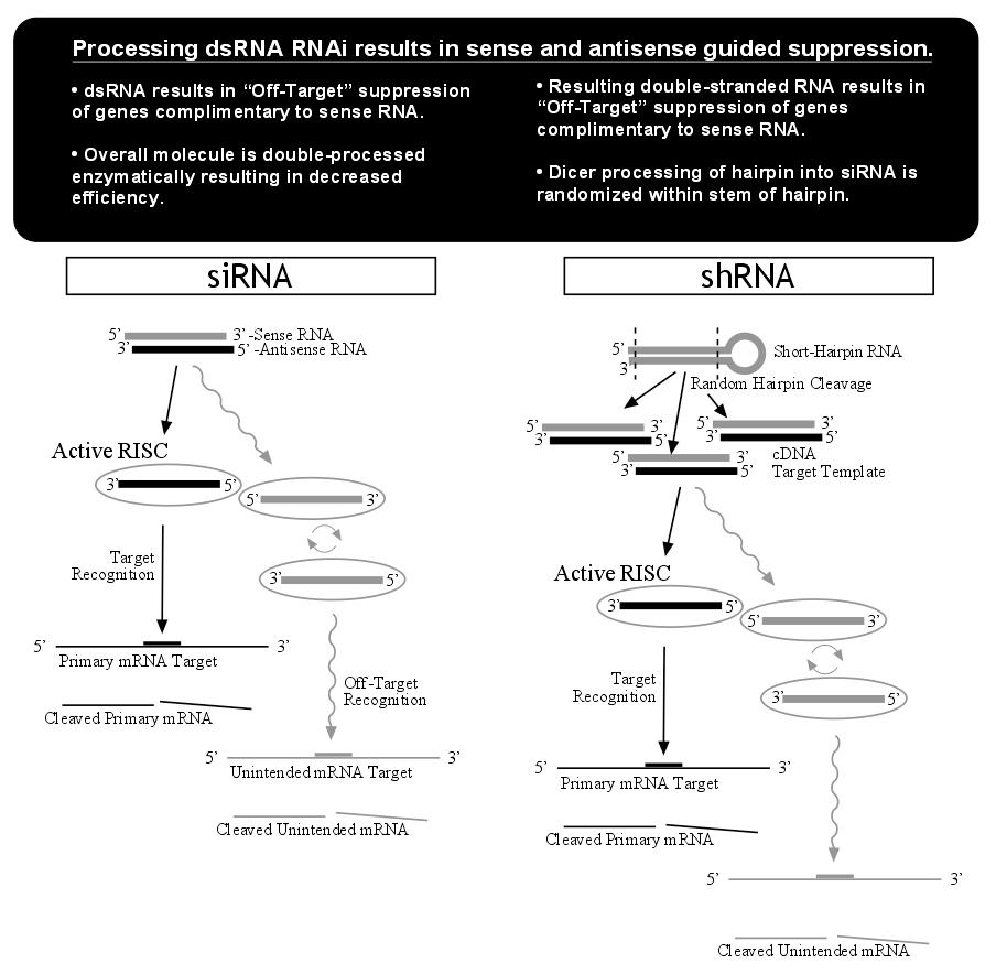 AsymmetricRNAi for pSUPER